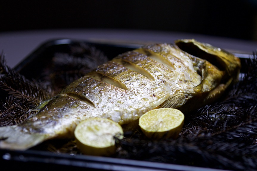 Oven roasted carp on spruce